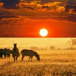 40 Interesting Africa Facts