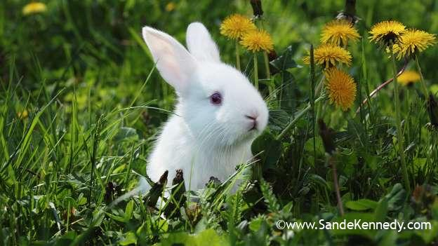 HOW TO BUY RABBIT URINE IN KENYA